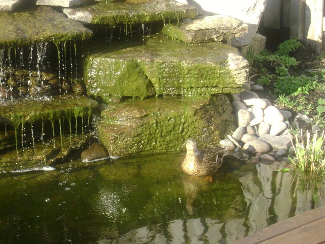 Pond Algae Solution Services - Make Life Easier…Call NOW!