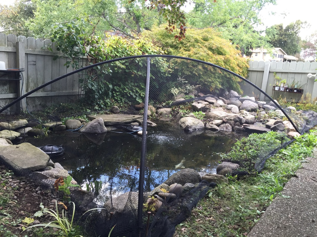 Fall Pond Netting/Tenting & Shut Down Services - Call Acorn Now!