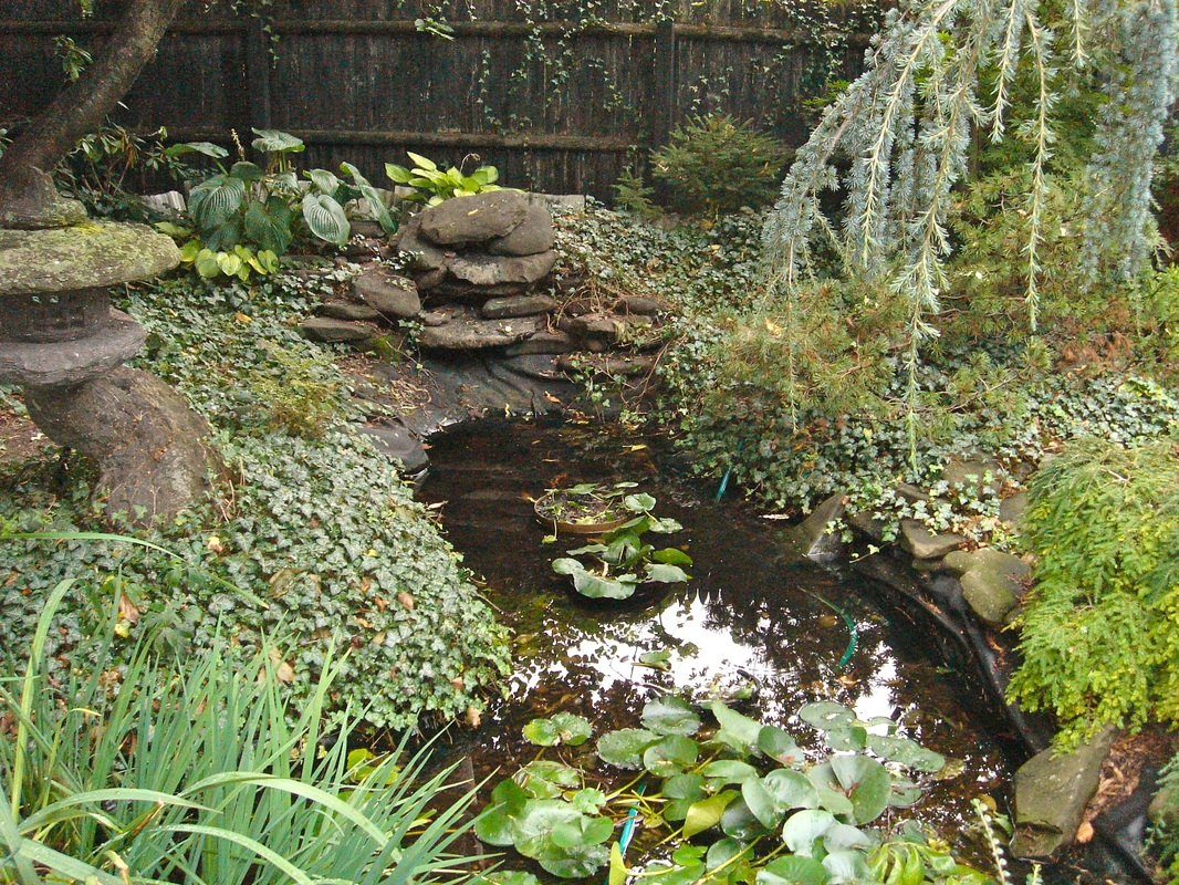 Pond (Rubber) Liner|Replacement|Repair|Service|NY|Acorn