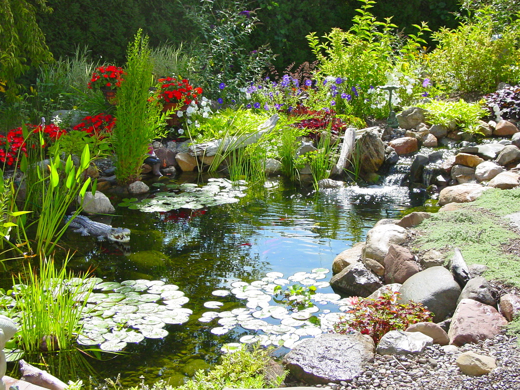 Learn The Key To A Healthy Ecosystem Pond In Rochester (NY) - Acorn Ponds