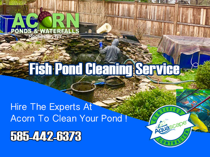Pond Cleaning Contractors- Hire The Experts-Rochester NY-Acorn Ponds