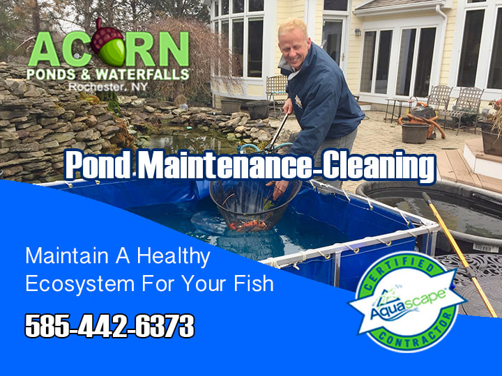 Pond Cleaning & Maintenance - Rochester, Buffalo & Western (NY) - Acorn